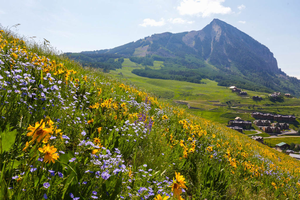 the marvellous crested butte colorado newport jets